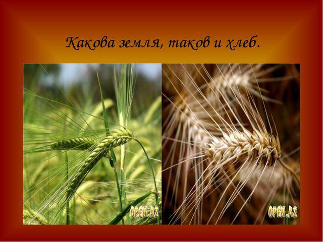Какова земля, таков и хлеб.