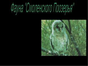 Богат и разнообразен животный мир национального парка: 190 видов птиц, 57 – м
