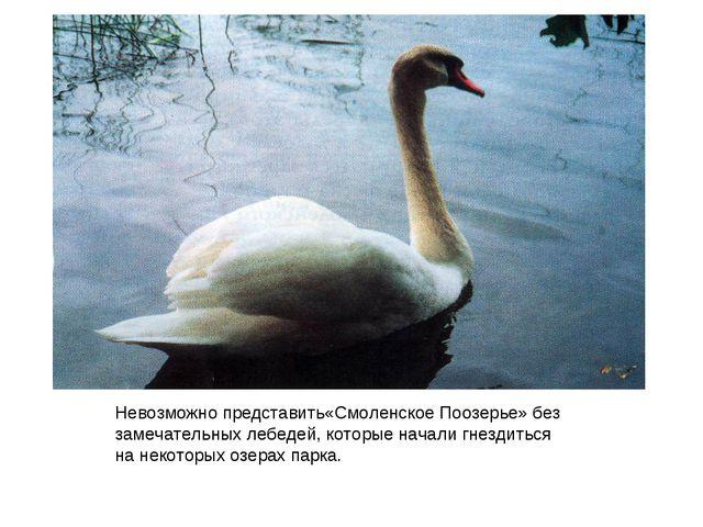 Невозможно представить«Смоленское Поозерье» без замечательных лебедей, которы...