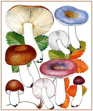 Загадки про грибы биология
