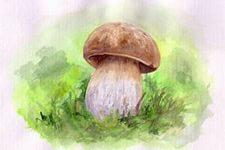 art-studio raduga: как рисовать грибы
