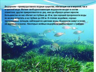 Водоросли – преимущественно водные существа, обитающие как в морской, так и в