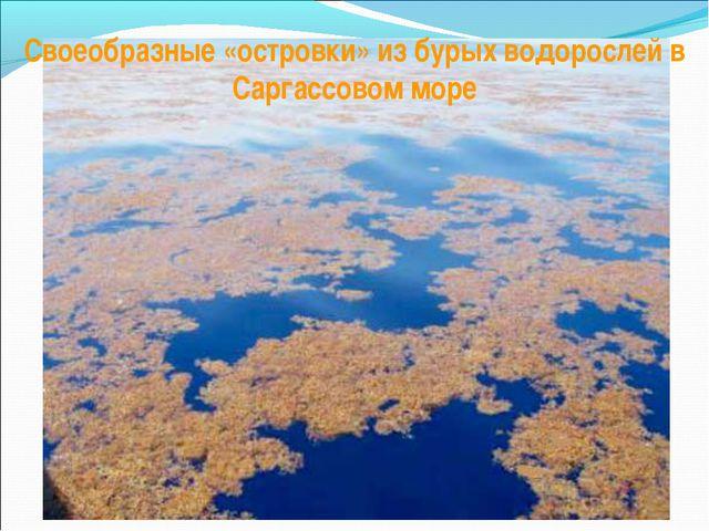 Своеобразные «островки» из бурых водорослей в Саргассовом море