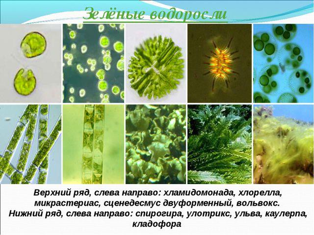 Зелёные водоросли Верхний ряд, слева направо: хламидомонада, хлорелла, микрас...