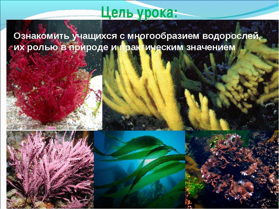 Цель урока: Ознакомить учащихся с многообразием водорослей, их ролью в природ...