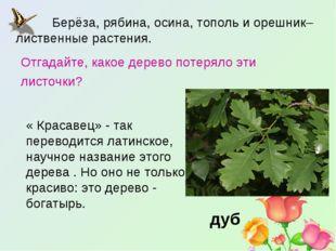 Берёза, рябина, осина, тополь и орешник– лиственные растения. дуб Отгадайте
