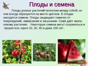 Плоды и семена Плоды разных растений непохожи между собой, но они всегда обр