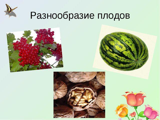 Разнообразие плодов