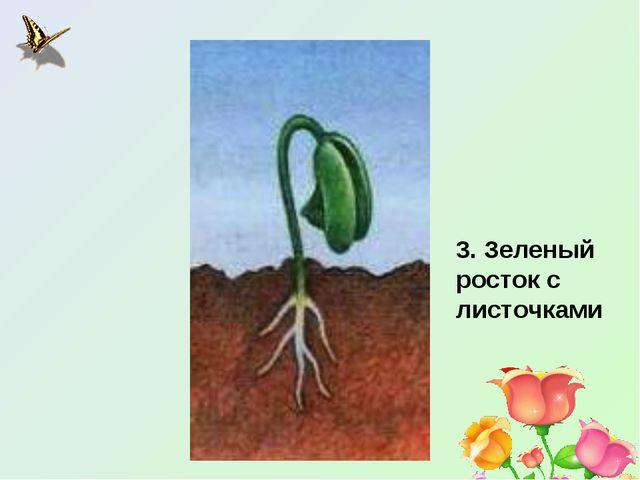 3. Зеленый росток с листочками