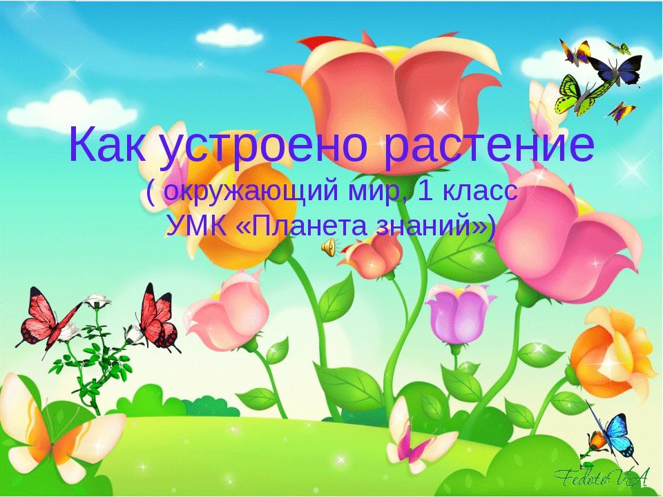 Как устроено растение ( окружающий мир, 1 класс УМК «Планета знаний»)