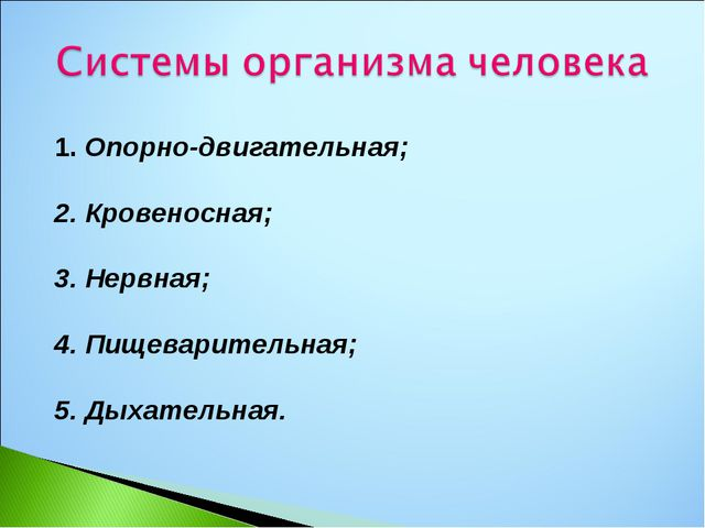 1. Опорно-двигательная; 2. Кровеносная; 3. Нервная; 4. Пищеварительная; 5. Д...