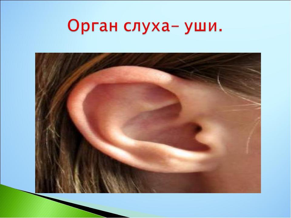 если подобрать картинки фото глаза уши рот хвост петуха нужно