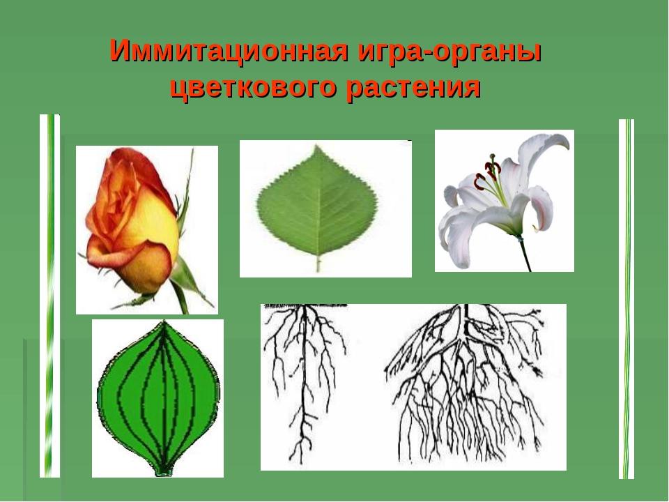 Иммитационная игра-органы цветкового растения