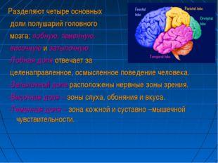 Разделяют четыре основных доли полушарий головного мозга: лобную, теменную, в