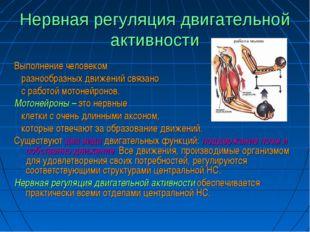 Нервная регуляция двигательной активности Выполнение человеком разнообразных