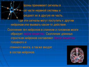 Нейроны принимают сигналы в одной части нервной системы и и передают их в др