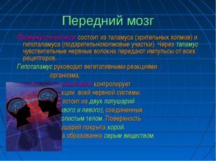 Передний мозг -Промежуточный мозг состоит из таламуса (зрительных холмов) и г