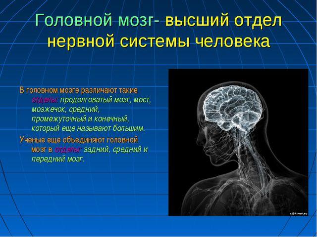 Головной мозг- высший отдел нервной системы человека В головном мозге различа...