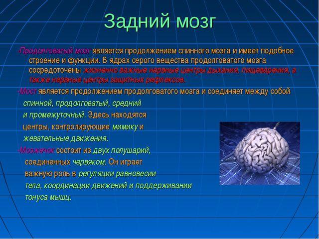 Задний мозг -Продолговатый мозг является продолжением спинного мозга и имеет...