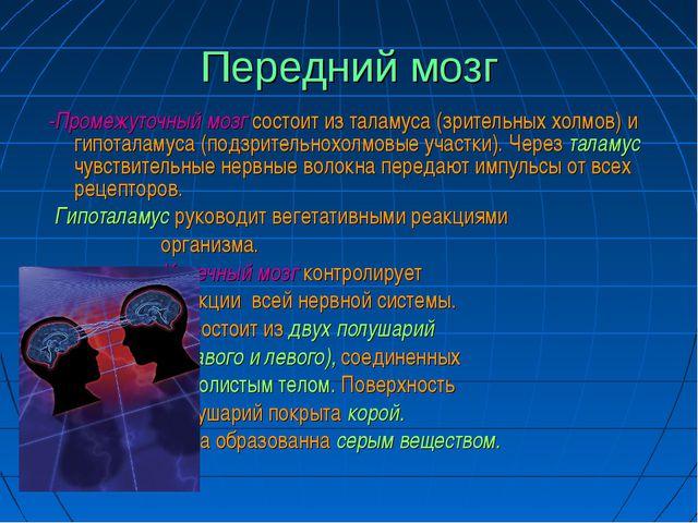 Передний мозг -Промежуточный мозг состоит из таламуса (зрительных холмов) и г...