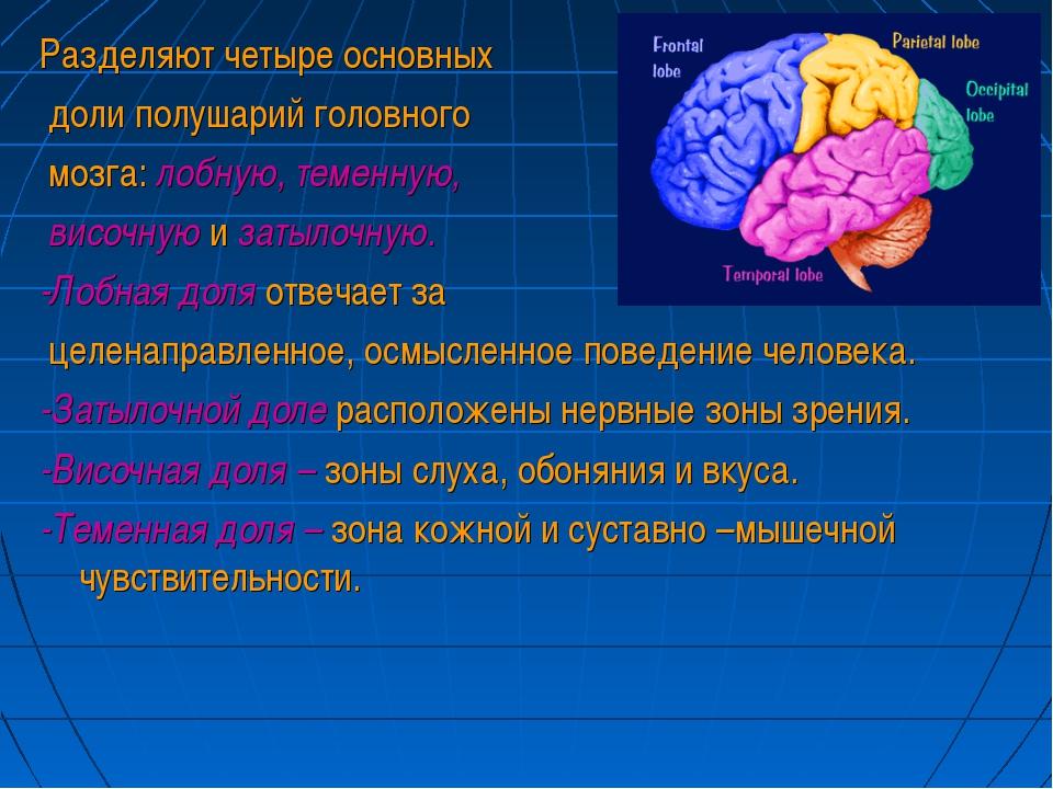 Разделяют четыре основных доли полушарий головного мозга: лобную, теменную, в...