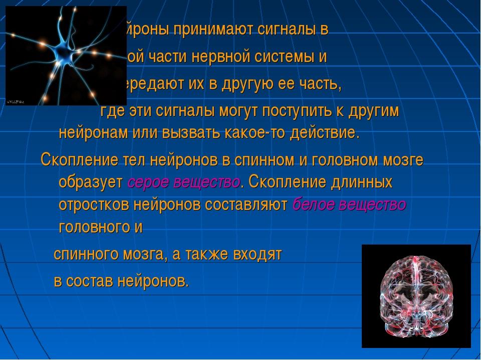 Нейроны принимают сигналы в одной части нервной системы и и передают их в др...