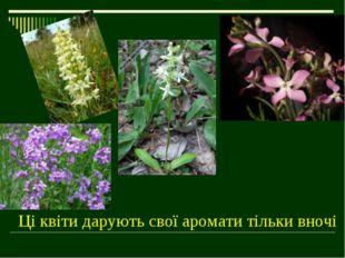 Ці квіти дарують свої аромати тільки вночі