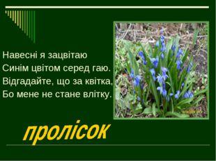 Навесні я зацвітаю Синім цвітом серед гаю. Відгадайте, що за квітка, Бо мене