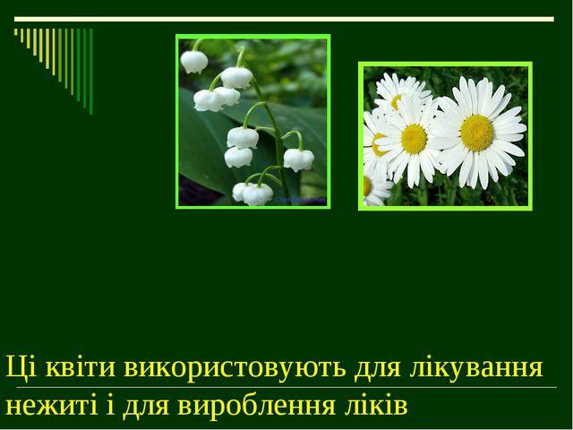 Ці квіти використовують для лікування нежиті і для вироблення ліків