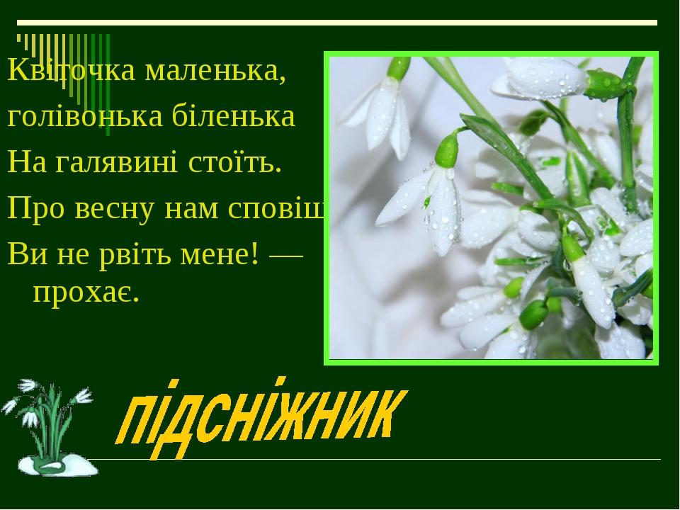 Квіточка маленька, голівонька біленька На галявині стоїть. Про весну нам спов...
