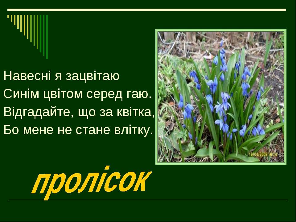 Навесні я зацвітаю Синім цвітом серед гаю. Відгадайте, що за квітка, Бо мене...