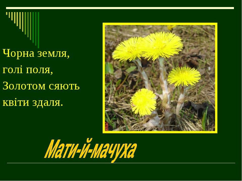 Чорна земля, голі поля, Золотом сяють квіти здаля.