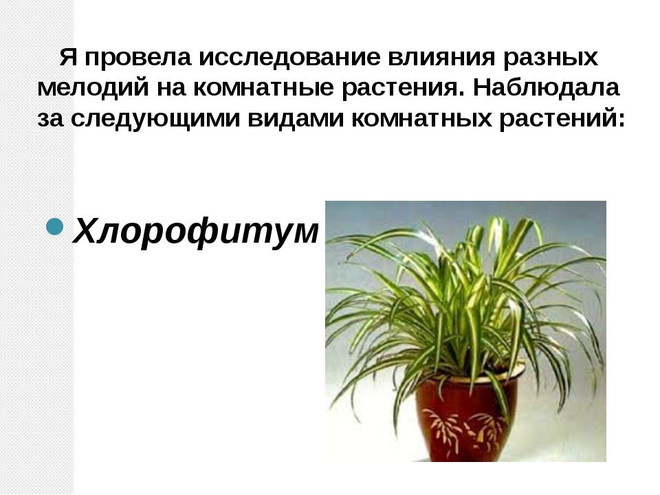 Я провела исследование влияния разных мелодий на комнатные растения. Наблюда...
