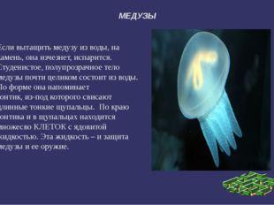МЕДУЗЫ Если вытащить медузу из воды, на камень, она изчезнет, испарится. Студ