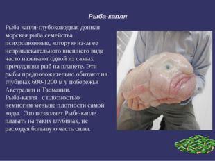 Рыба-капля Рыба капля-глубоководная донная морская рыба семейства психролютов