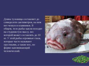 Длина туловища составляет до семидесяти сантиметров, на нем нет чешуи и плав