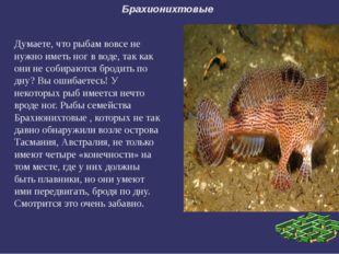 Брахионихтовые Думаете, что рыбам вовсе не нужно иметь ног в воде, так как он
