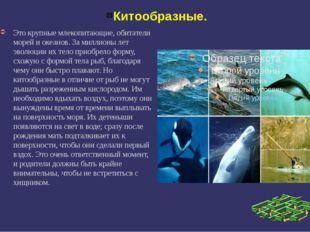 Китообразные. Это крупные млекопитающие, обитатели морей и океанов. За миллио