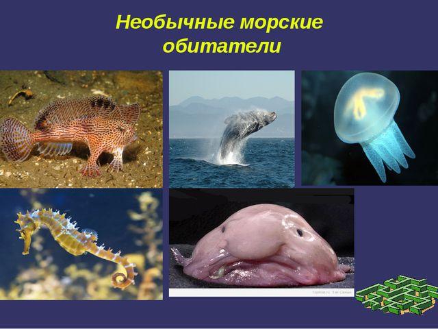 Необычные морские обитатели