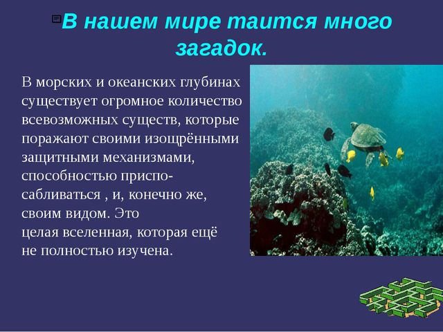 В нашем мире таится много загадок. В морских и океанских глубинах существует...