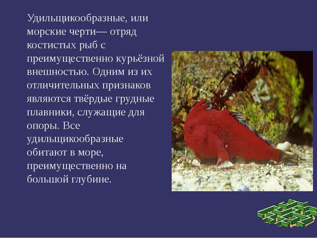 Удильщикообразные, или морские черти— отряд костистых рыб с преимущественно...