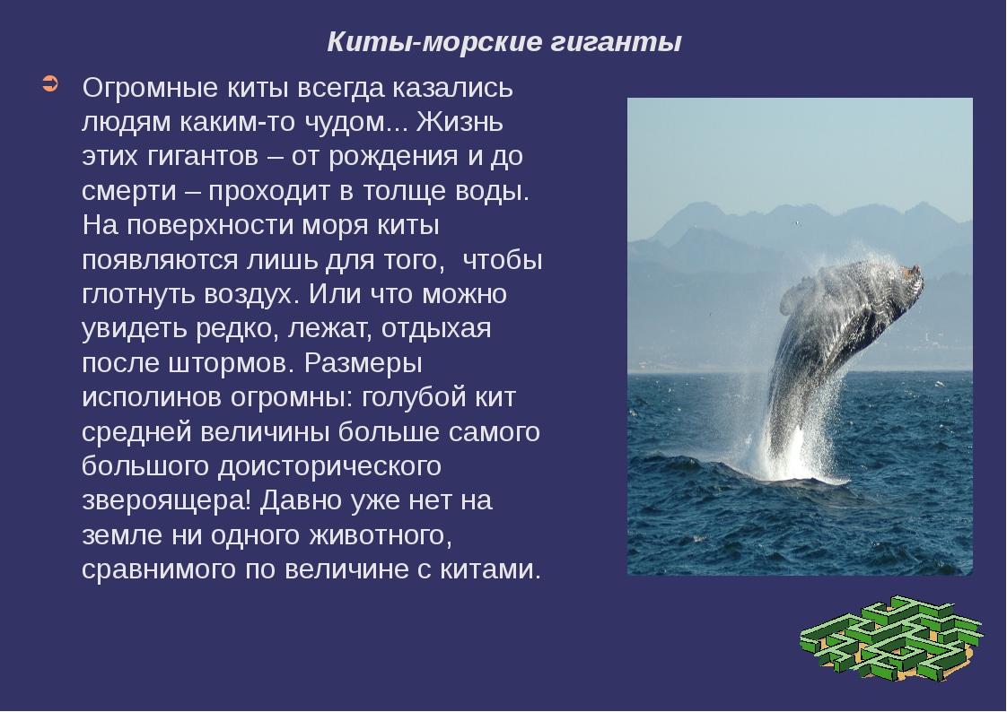 Киты-морские гиганты Огромные киты всегда казались людям каким-то чудом... Жи...