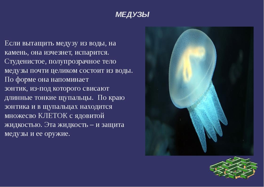 МЕДУЗЫ Если вытащить медузу из воды, на камень, она изчезнет, испарится. Студ...