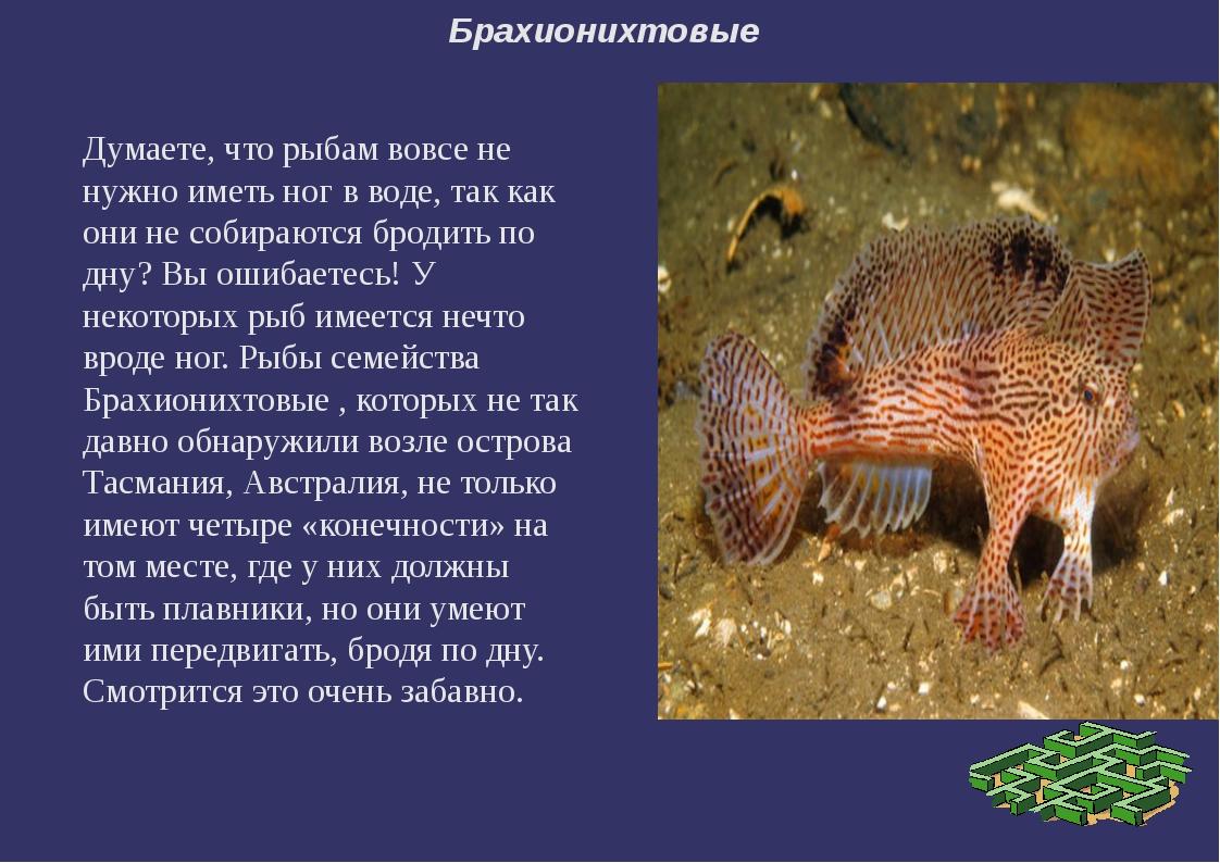 Брахионихтовые Думаете, что рыбам вовсе не нужно иметь ног в воде, так как он...
