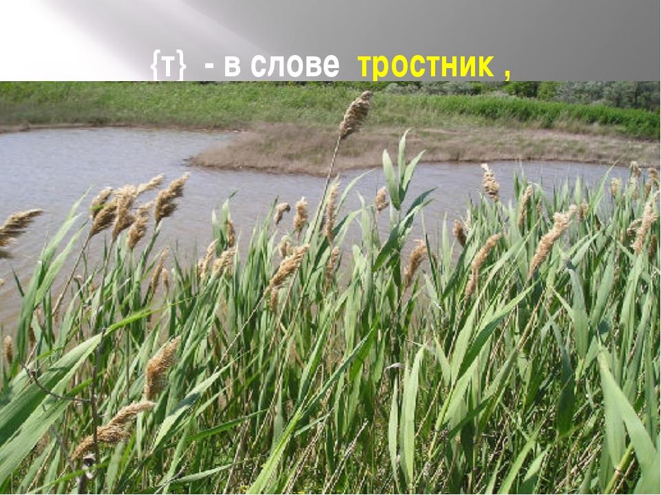 {т} - в слове тростник ,