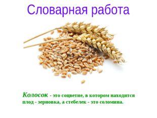 Колосок - это соцветие, в котором находится плод - зерновка, а стебелек - это