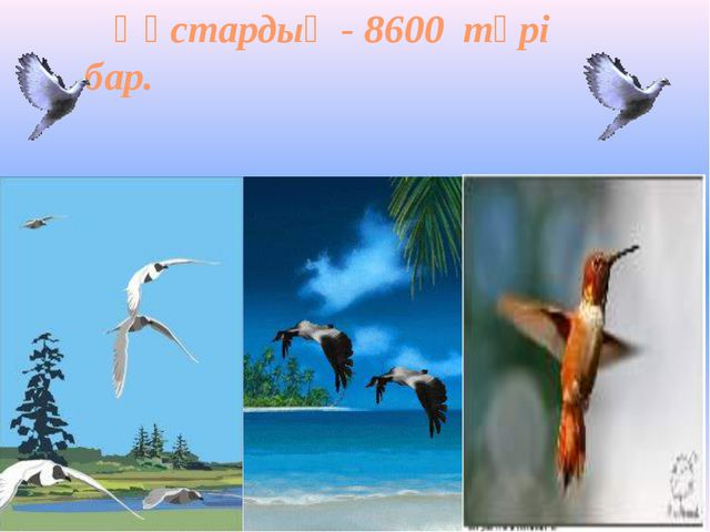 Құстардың - 8600 түрі бар.