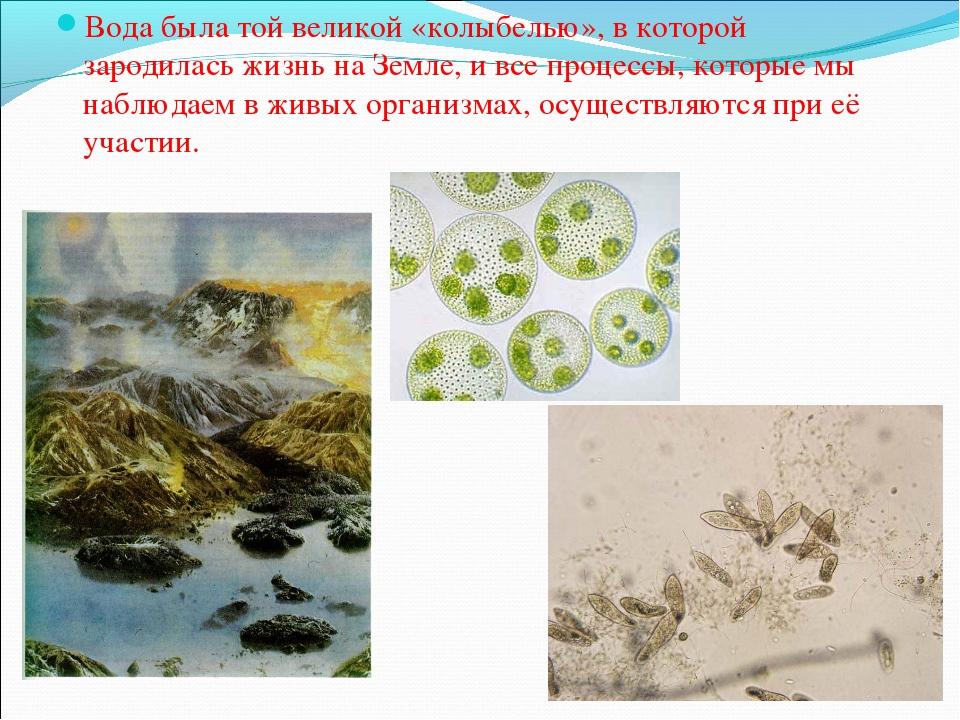 Вода была той великой «колыбелью», в которой зародилась жизнь на Земле, и все...