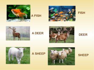 A FISH FISH DEER A SHEEP SHEEP A DEER