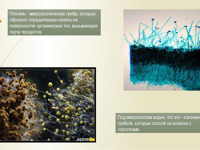 Плесень- микроскопические грибы, которые образуют определенные налеты на пов...